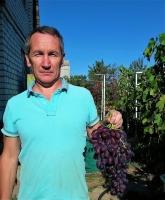 Виноград Ирэн